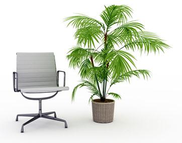 växter till kontoret